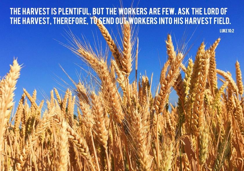 harvest lo Luke 10