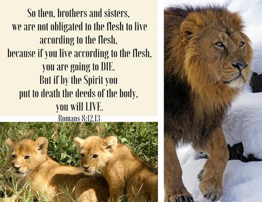 Romans 8 12,13