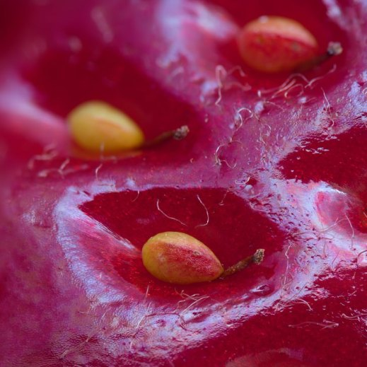 extreme-close-up-of-a-strawberry-728x728