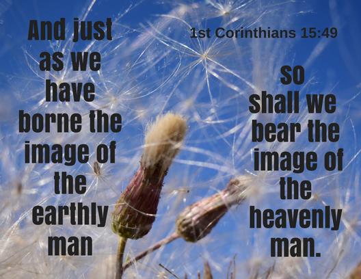 1 Corinthians 15_49 new