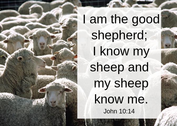 John 10 14