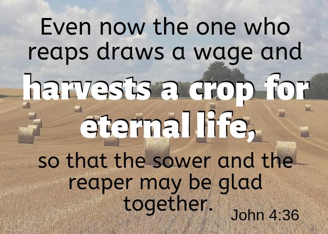 John 4 36